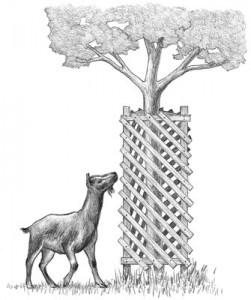 goatprooftree